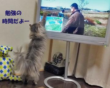 テレビに近づきすぎよーー