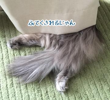 毛のカタマリ