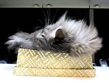 交互にティッシュ猫してます