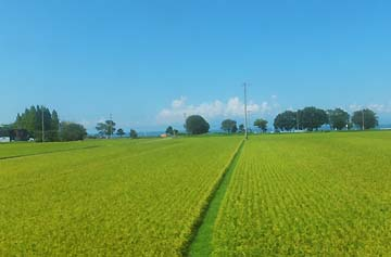 見事な田園風景
