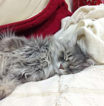 あおくん、かわいい寝顔です