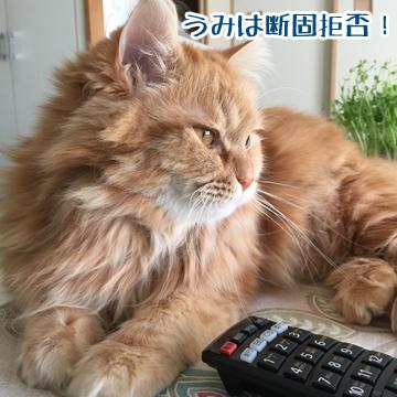 ネコそれぞれ